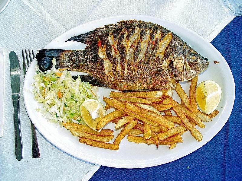 حرفهایی که پشت سر ماهی «تیلاپیا» میزنند