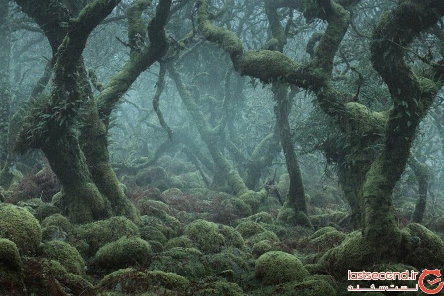 مخوفترین جنگلهای زمین، اینجاست