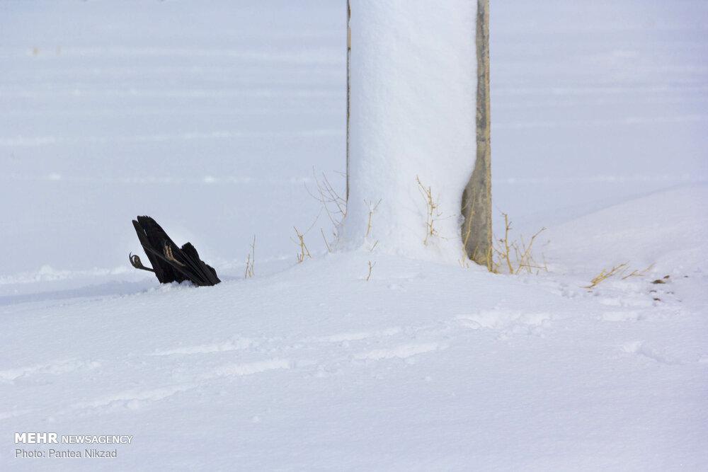 گزارش تصویری؛ با مهر و احترام، تقدیم به همه ما برف ندیدهها!