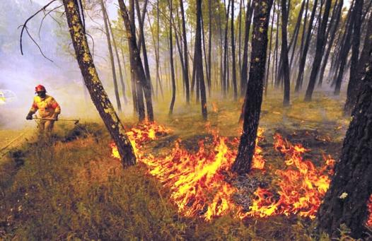 آمازون؛ جنگلی در اسارت آتش و دود