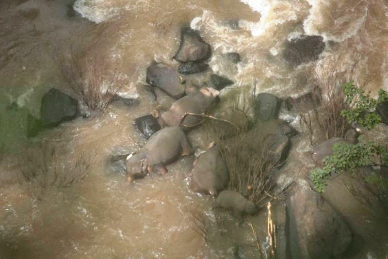 مرگ غمانگیز شش فیل شجاع در تایلند