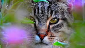 گربهها شما را کنترل میکنند!
