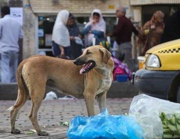 یک سگ، ۶ نفر را روانه بیمارستان کرد