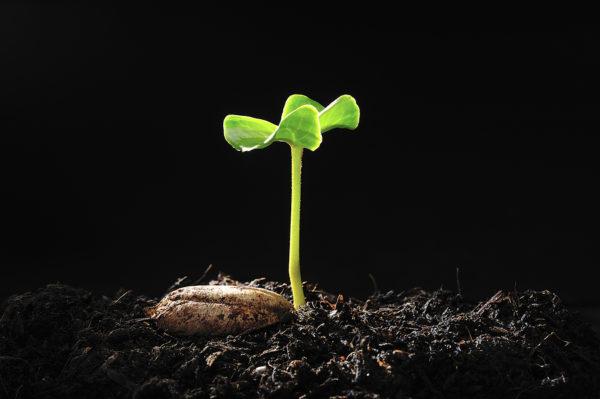 گیاهان هم فکر میکنند!