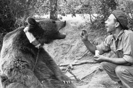 خرس محبوب و قهرمان جنگ جهانی دوم!