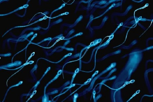 سروکله ویروس کرونا در اسپرم انسان پیدا شد!