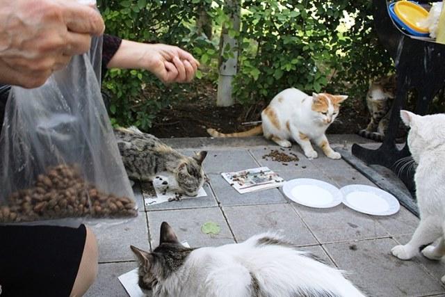 بالاخره به گربههای خیابانی غذا بدهیم یا نه؟