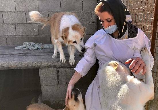 گزارش تصویری | پناهگاه سگها در شیراز