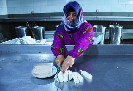 صنعت پنیر؛ از پنیر گچی تا پنیر پیتزا و خامهای