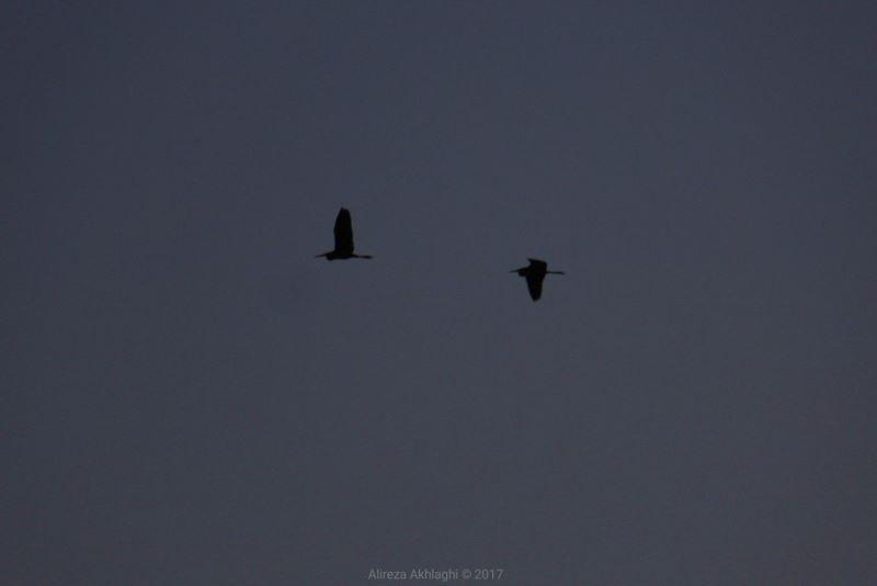 چرا پرندهها آسمان تهران را ترک کردهاند؟