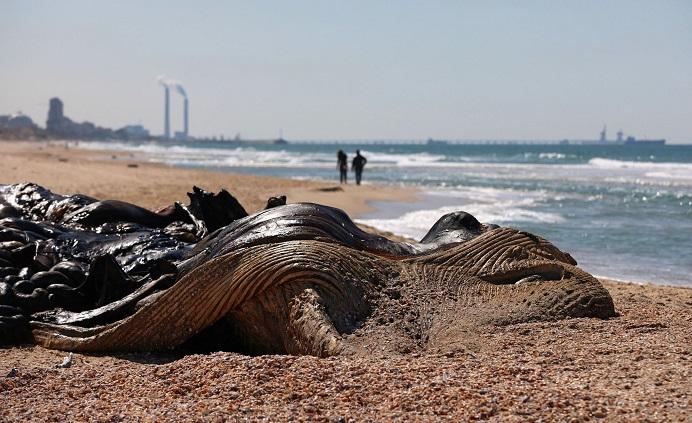 ادعای تازه اسرائیل: ایران سواحل ما را آلوده کرده است