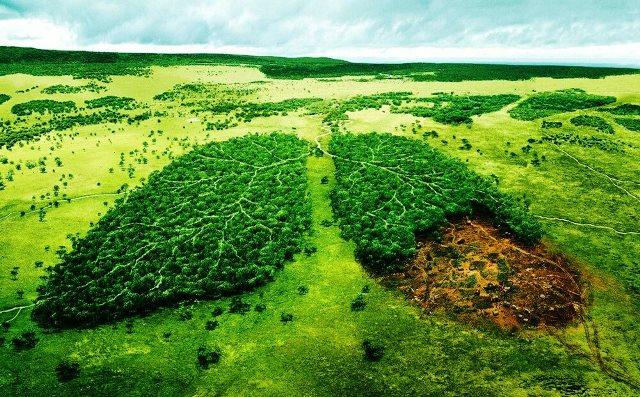 تخریب محیط زیست؛ یکی از دلایل شیوع کرونا!
