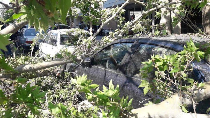 عکس   سقوط درخت کهنسال خیابان ولیعصر روی خودروها