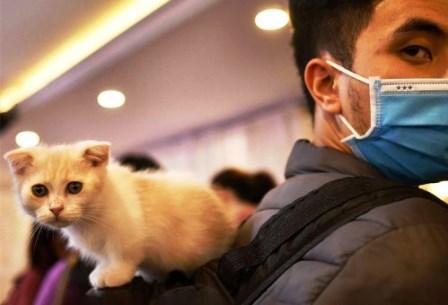 هشدارهای کرونایی به گربهدارها
