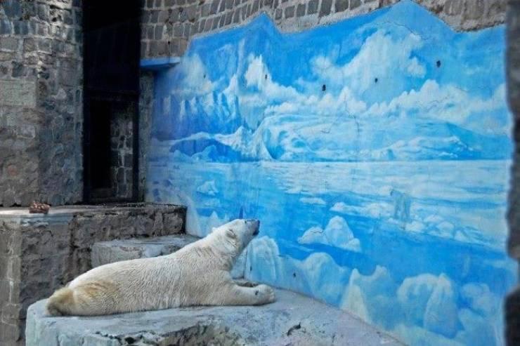 تماشا کنید| بیچاره ما خرسهای قطبی!