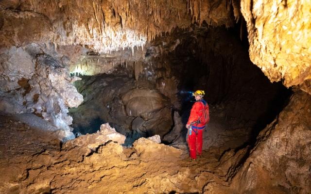 شواهدی بر وجود اجداد ۲۰هزار ساله کرونا