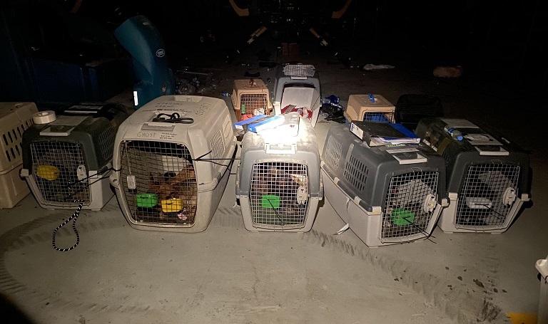 ارتش آمریکا سگهای آموزش دیده را در کابل جا گذاشت
