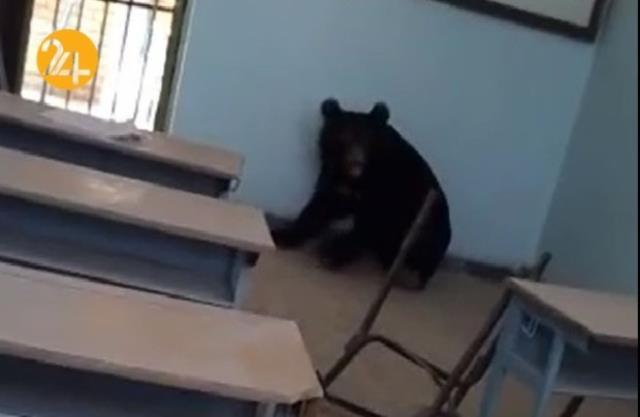 ویدئوهای پربازدید هفته  خرس سیاه، کانیه و طوفان