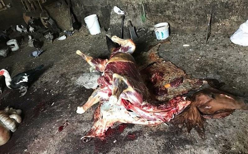 نیم تن گوشت اسب و الاغ قبل از عرضه به بازار تهران معدوم شد!