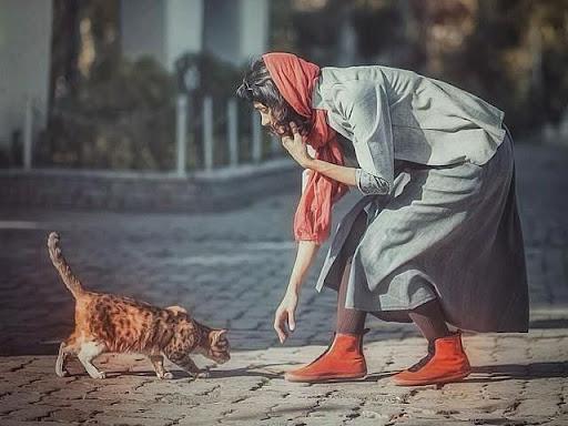هفت باور اشتباه و پرتکرار درباره سگ و گربه